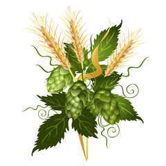 Hop vine and barley ears. Realistic vector illustration isolated on white background.