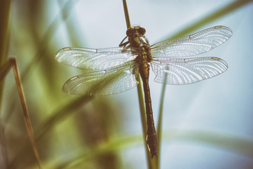Dragonfly in spring in May on the stem of a plant above the river close-up