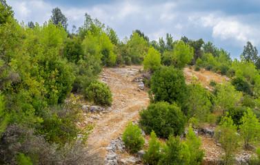 Grüne Bäume in bergischer Bergregion