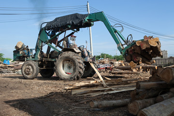 Tractor for export of timber logs Lumber Industry machine with pile of wood.