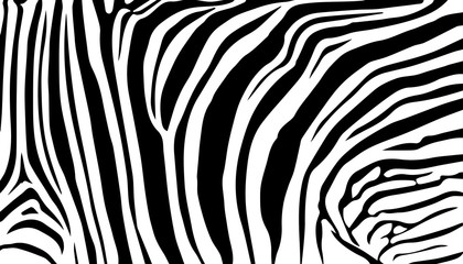 background stripe animals jungle texture zebra vector black white