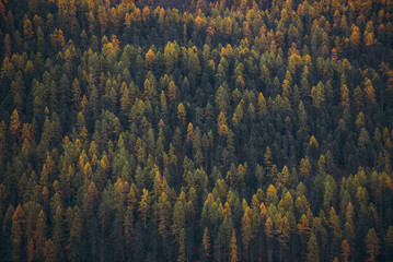 Tree composition capture on the european alps