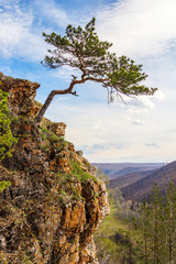 Pine growing on a cliff above a precipice on a sunny spring day