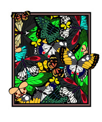 a picture which is made of butterflies. vector illustration