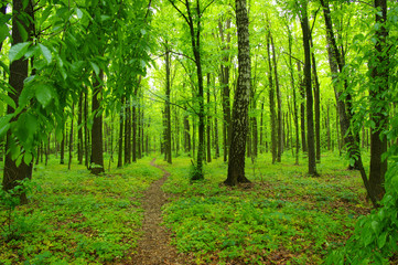Papiers peints Forets Forest trees in spring