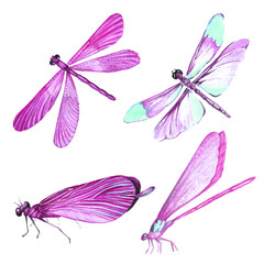 Watercolor collection of pink dragonfly illustrations