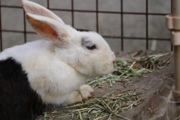 食事中のウサギ