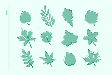 set of isolated hand drawn leaf icons. vector leaves logo collection. thin line contour, seasonal design elements. natural plant symbol