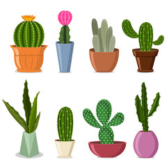 Сactuses in pots set. Vector illustration of home decorative plants with flowers isolated on white background.