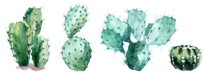 Watercolor set of cactus  isolated illustration on a white background