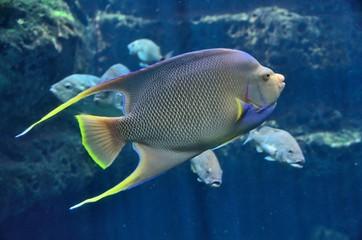 Vibrant colored tropical saltwater fish at indoor aquarium