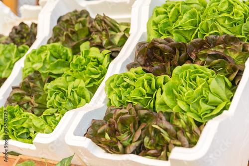 Lettuce on farmers market