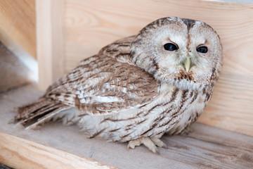 owl sit on wooden plank