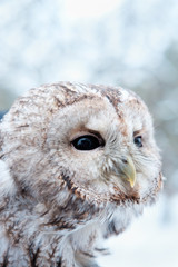 owl looking away