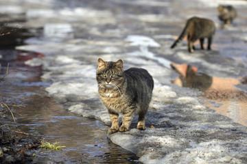 striped cat in spring