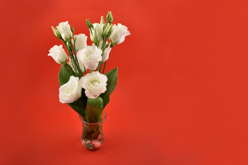 White romantic bouquet in a vase stock images. Lisianthus, Eustoma Grandiflorum. Tender white bouquet. White flowers on a red background