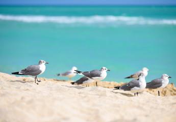 Seagulls sitting on the beautiful beach. Azure color of sea.