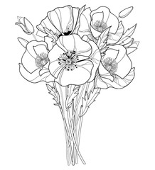 Vector bouquet with outline Poppy flower, bud and leaves in black isolated on white background. Ornate poppies in contour style for summer design and coloring book. Symbol of Remembrance Day.