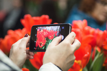 Hands with the phone make a photo of flowers on flowers exhibition. People using mobile phones, people making photos, using technology concept. Selective focus