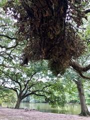 Audubon Park New Orleans - USA