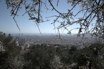 Panorámica de la ciudad de Barcelona con árbol en flor