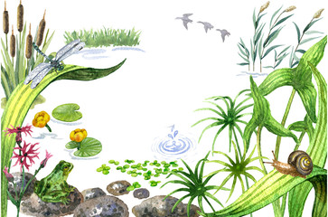 Raster watercolor cute illustration of a summer pond. Image for biological books, magazines and atlases, design element, summer and wetland theme.