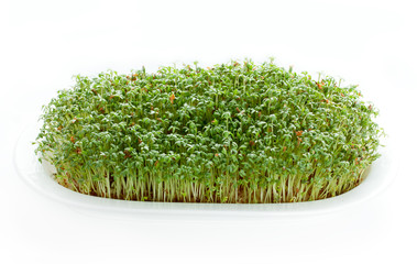 Green watercress sprouts