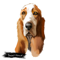 Basset Hound or Hush Puppy short-legged breed scent hound family dog digital art illustration isolated on white background. British, french origin dog. Cute pet hand drawn portrait. Graphic clip art