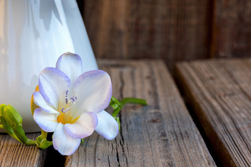 A single freesia blossom on  a rustic wooden plank table next to a white pitcher.