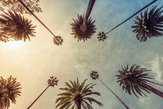 Los Angeles palm trees, low angle shot. Sun rays