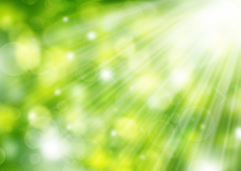 Spring blurred Sunny bokeh background green, yellow,white