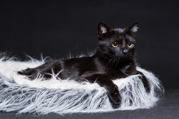 cat of black color lies on its stove on a black background