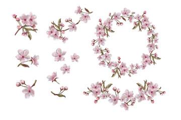 Spring Flowers Apple/Cherry/Almond, Botanical Watercolor Illustration.