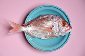 red Sea bream or Dorade rose in a turquoise bowl on pastel pink background