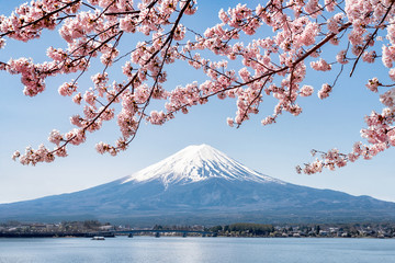 Rosa Kirschblüte im Frühling am Berg Fuji in Kawaguchiko, Japan