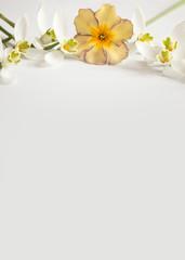 Romantischer Blumenrahmen mit Schneeglöckchen und Primeln auf hellem Hintergrund