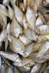 fresh white fish on basket selling in market