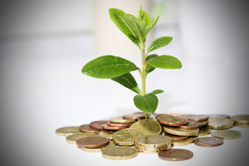 coins on the office table with young plant, business concept