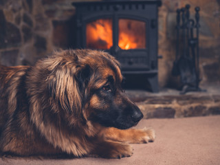 Dog relaxing by the fire