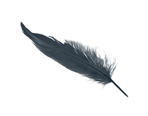 Beautiful black feather isolated on white background