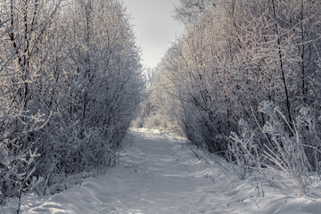 Majestic sunny winter day in Russia. Trail and trees covered with hoarfrost and snow