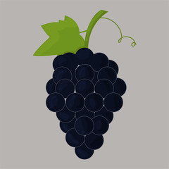 Vector image of grapes