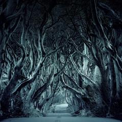 Sinister dark forest