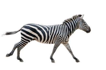 Zebra,