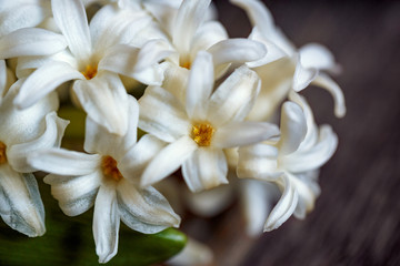 close up of white hyacinth flowers and red heart on wooden background.