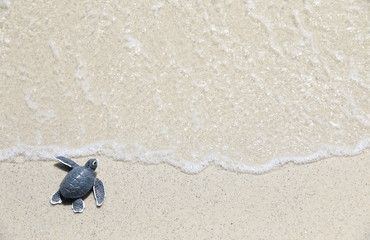 Photo sur cadre textile Tortue turtle baby On the beach Top view Copy space