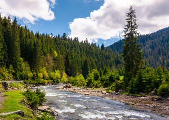 beautiful landscape with forest river in mountains. gorgeous springtime scenery on bright day with some clouds on a blue sky