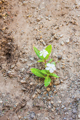 flowers in dry soil background