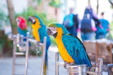 Parrot at Yuen Po street bird market