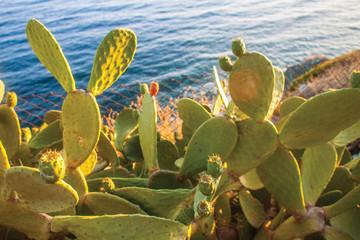 cactus background pattern